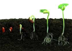 Your well-being is meant to sprout like a garden