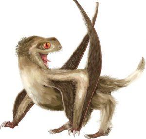Pterosaurs anurognathids graphic